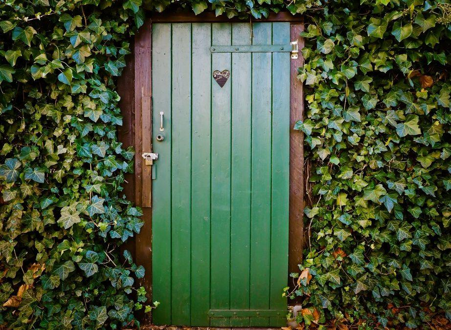 Giardino Verticale: Benefici e Consigli